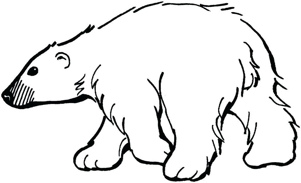 1024x623 Polar Bear Outline Drawing