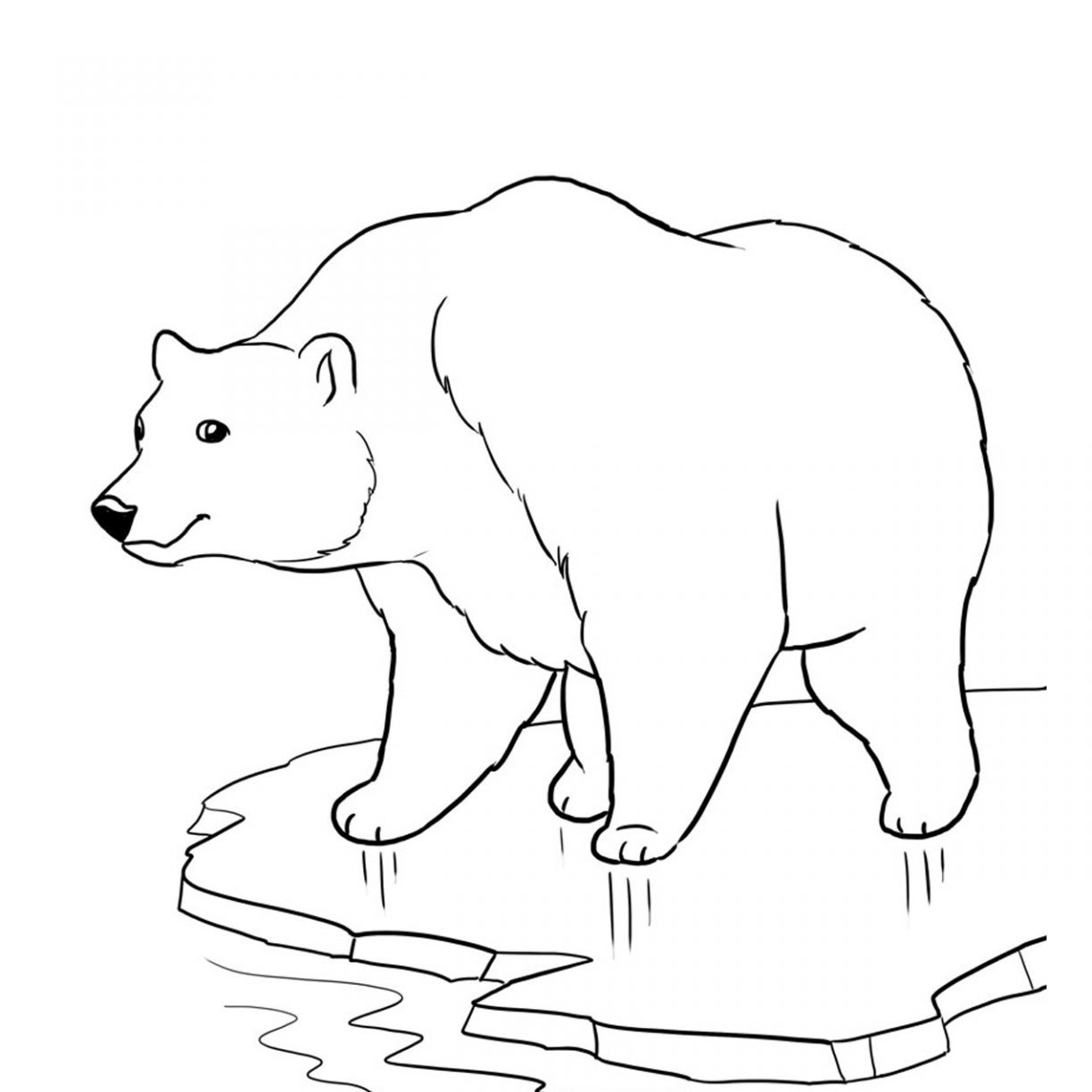 1224x1224 Polarar Printable Coloring Pages Baby Sheets Animalst Best Polar