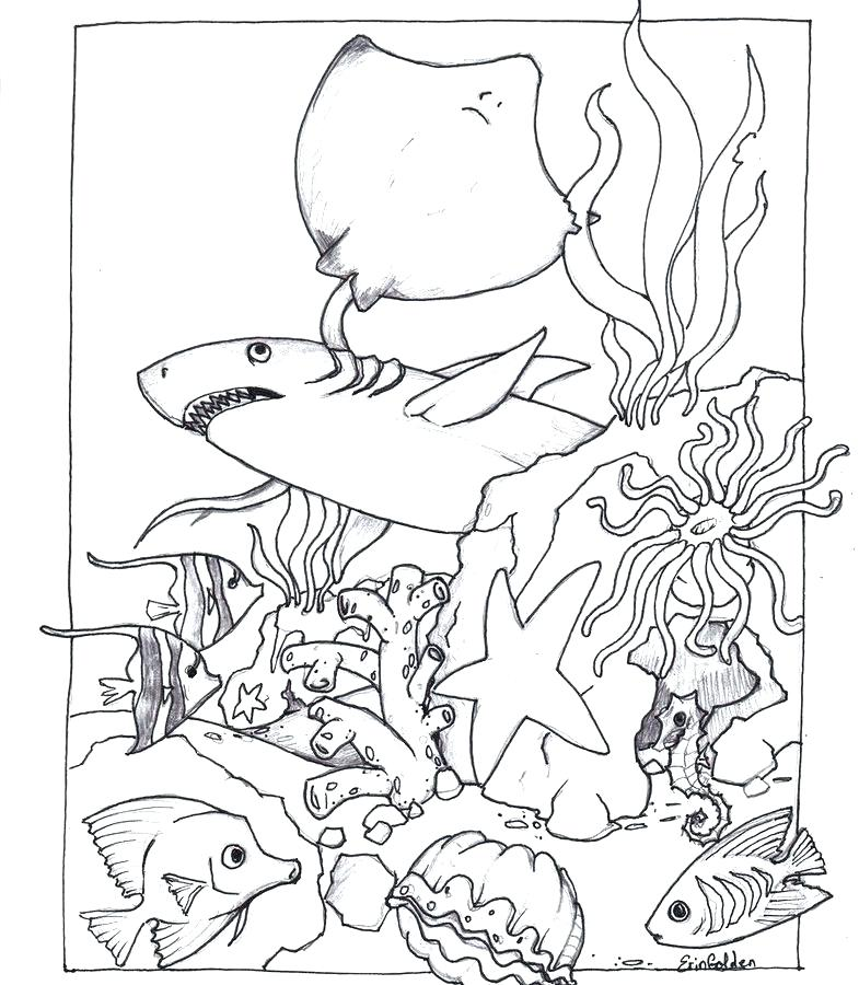 Pond Animals Coloring Pages