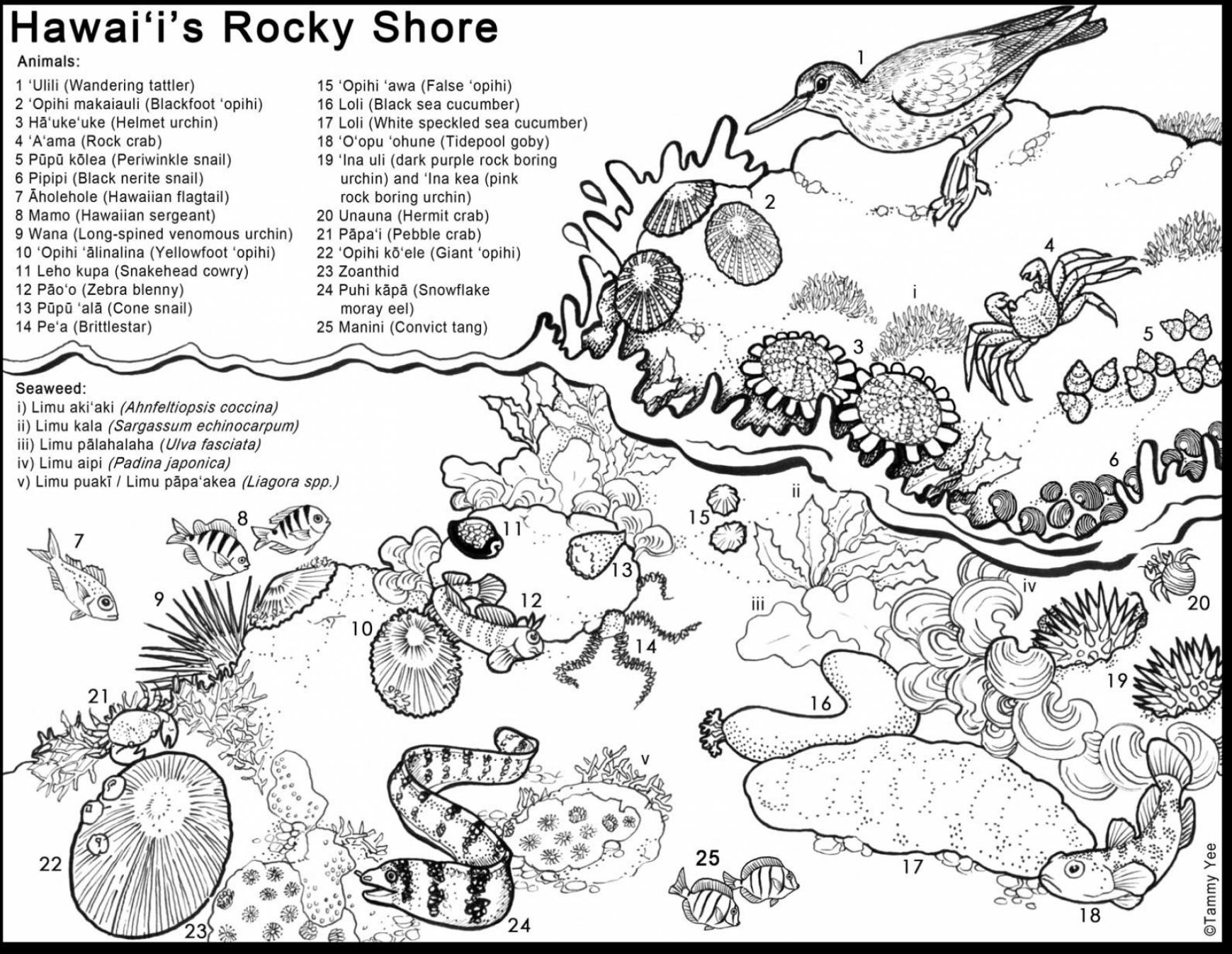1739x1346 Grand Hawaii Coloring Pages Outstanding Tide Pool Animals For Kids