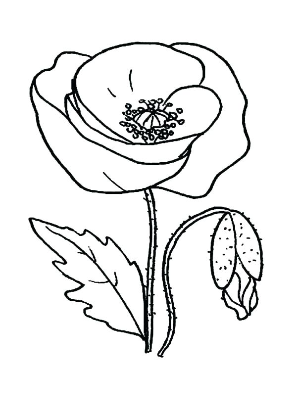 600x849 Poppy Coloring Pages Garden Of Poppy Coloring Page Poppy Wreath