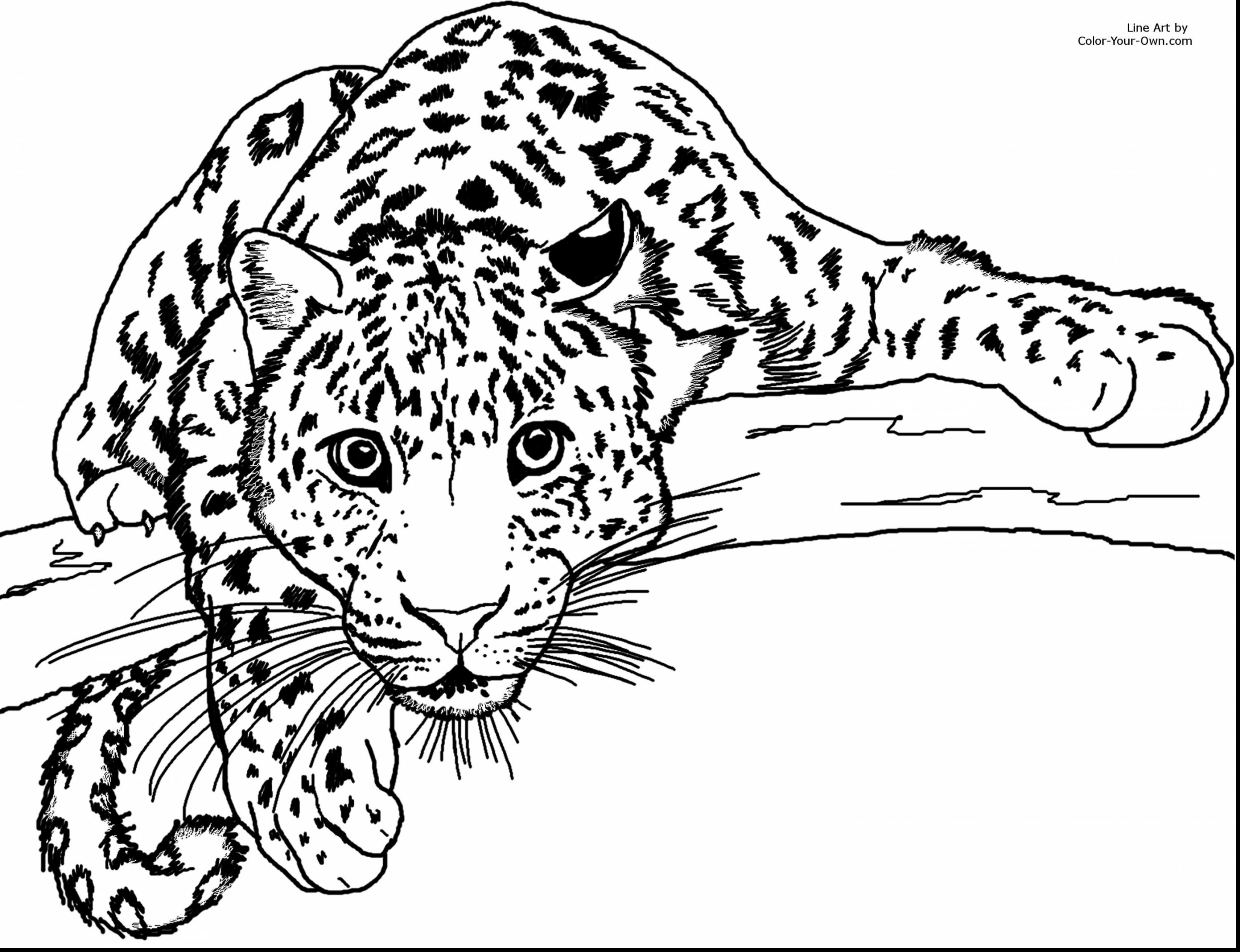 3300x2534 Popular Cheetah Coloring Pages To Print