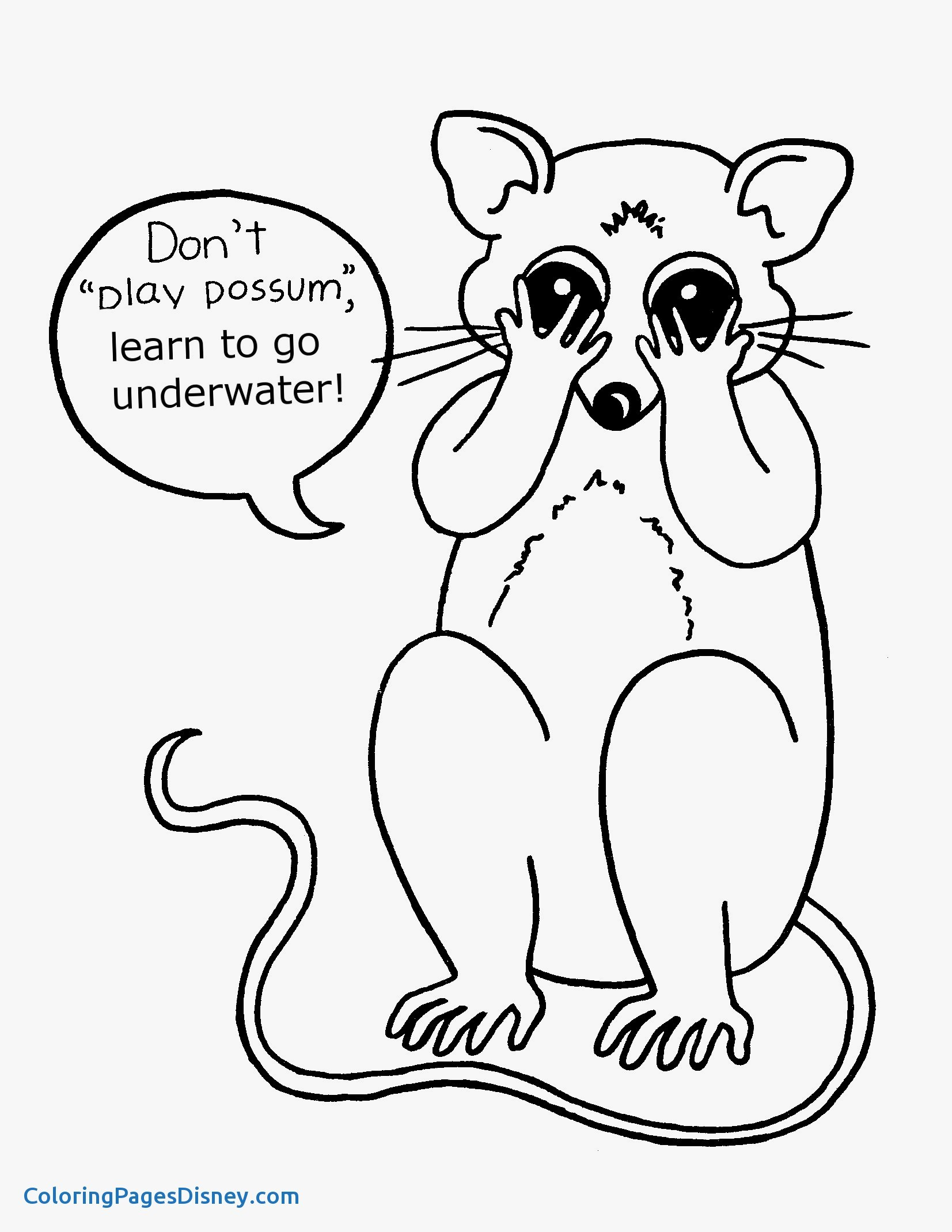 The best free Possum coloring page images. Download from ...