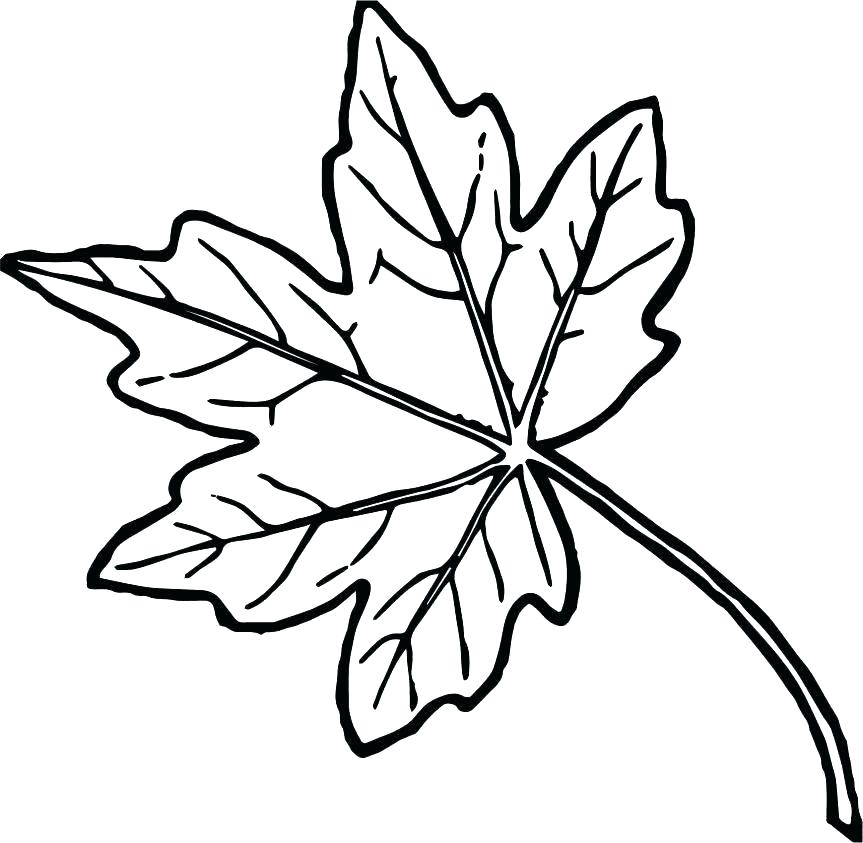 863x843 Fall Leaf With Maple Tree In Fall Leaf Coloring Page Pot Leaf