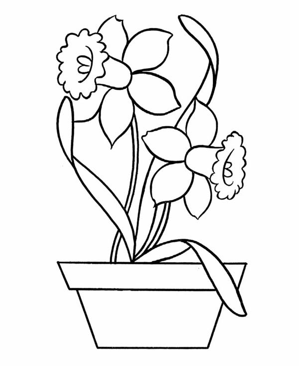 600x734 Daffodil In Pottery Coloring Page
