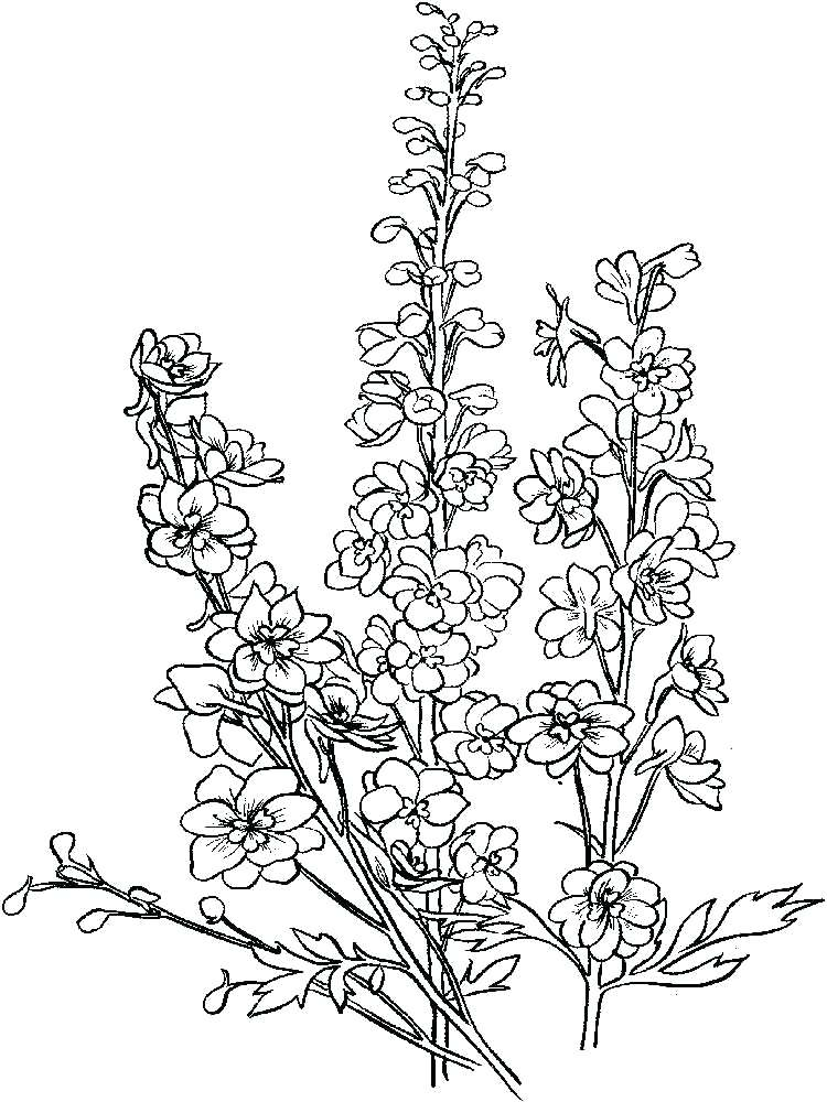 750x1000 Praying Mantis Coloring Page Flower Mantis Coloring Pages Praying