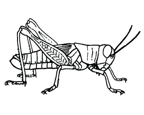600x477 Praying Mantis Coloring Page Grasshopper Coloring Page Grasshopper