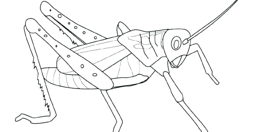 860x450 Praying Mantis Coloring Page Praying Mantis Coloring Page Awesome