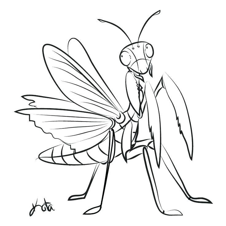 736x736 Praying Mantis Coloring Page Praying Mantis Coloring Page Praying