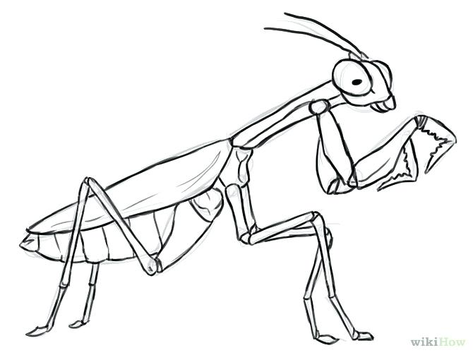 670x503 Praying Mantis Coloring Page Praying Mantis Drawing Google Search
