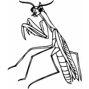 300x300 Praying Mantis Coloring Page