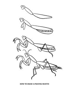 236x305 Praying Mantis Coloring Page From Praying Mantis Category Select