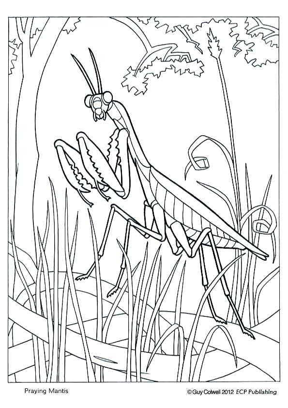 595x842 Awesome Awesome Praying Mantis Coloring Page Free Download Kids