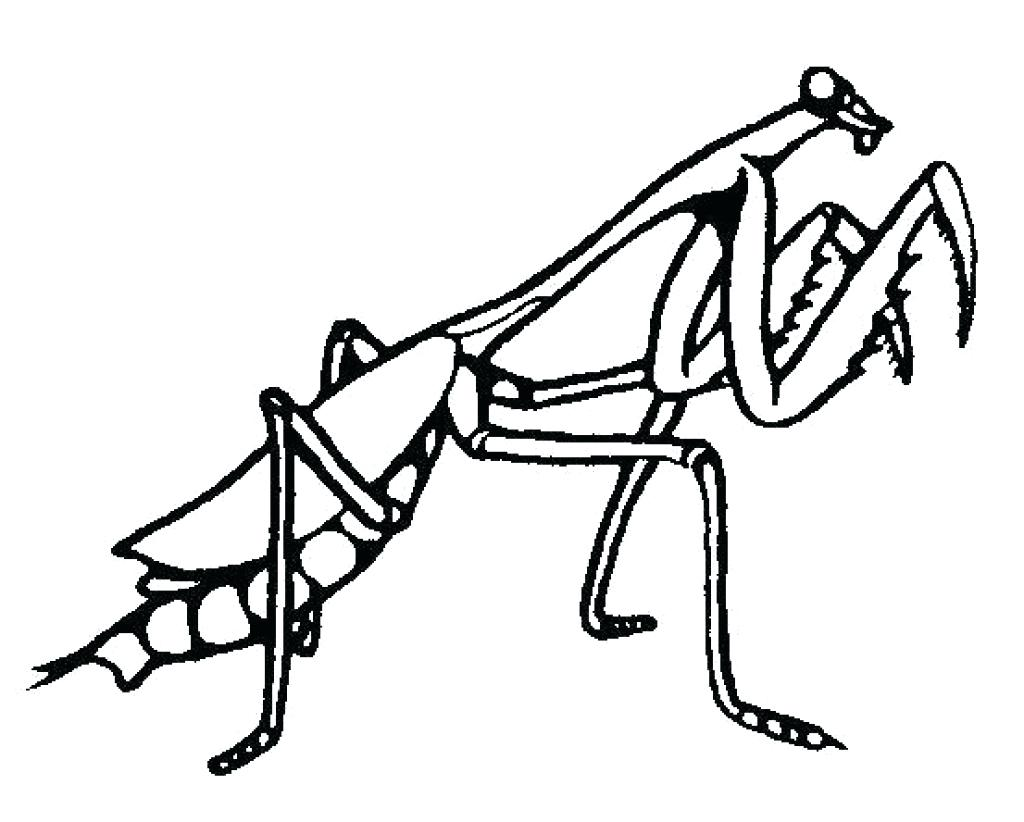 1024x822 Fried Egg Colouring Pages Praying Mantis Coloring Page Delicious