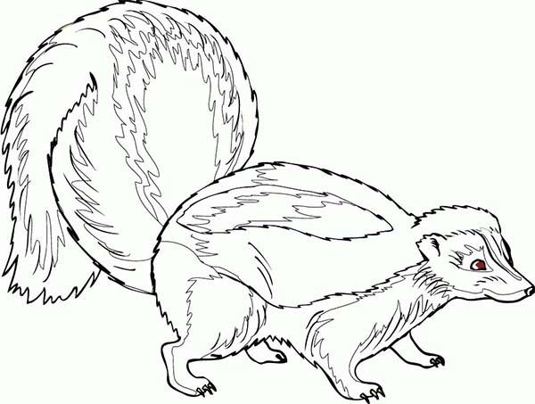 600x453 Pregnant Skunk Coloring Page Color Luna