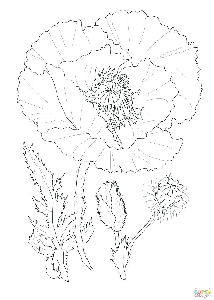 731x1024 Pretty Coloring Pages Poppies Coloring Pages Pretty Poppy Flower
