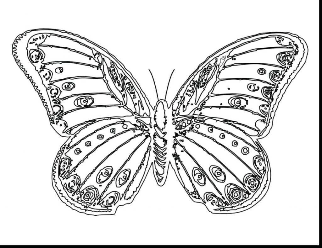 1024x791 Coloring Pages Beautiful Coloring Pages Brilliant Butterfly