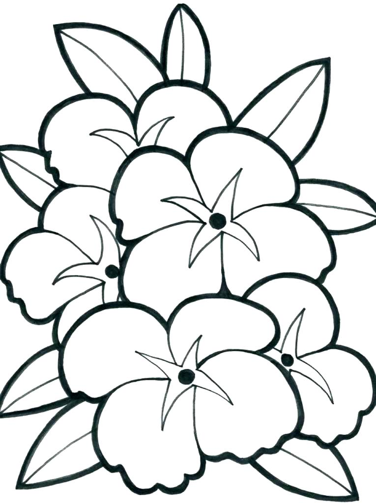 765x1024 Cute Flower Coloring Pages Spring Flowers Coloring Sheets Spring