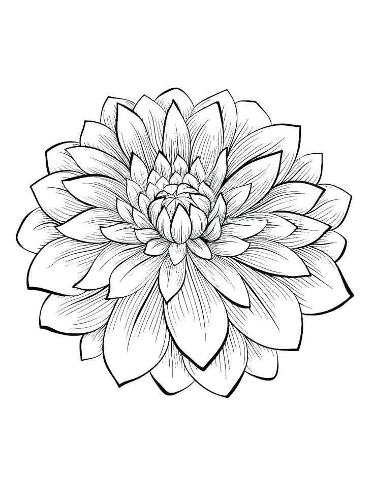 736x950 Elegant Hard Flower Coloring Pages And Pretty Flower Coloring