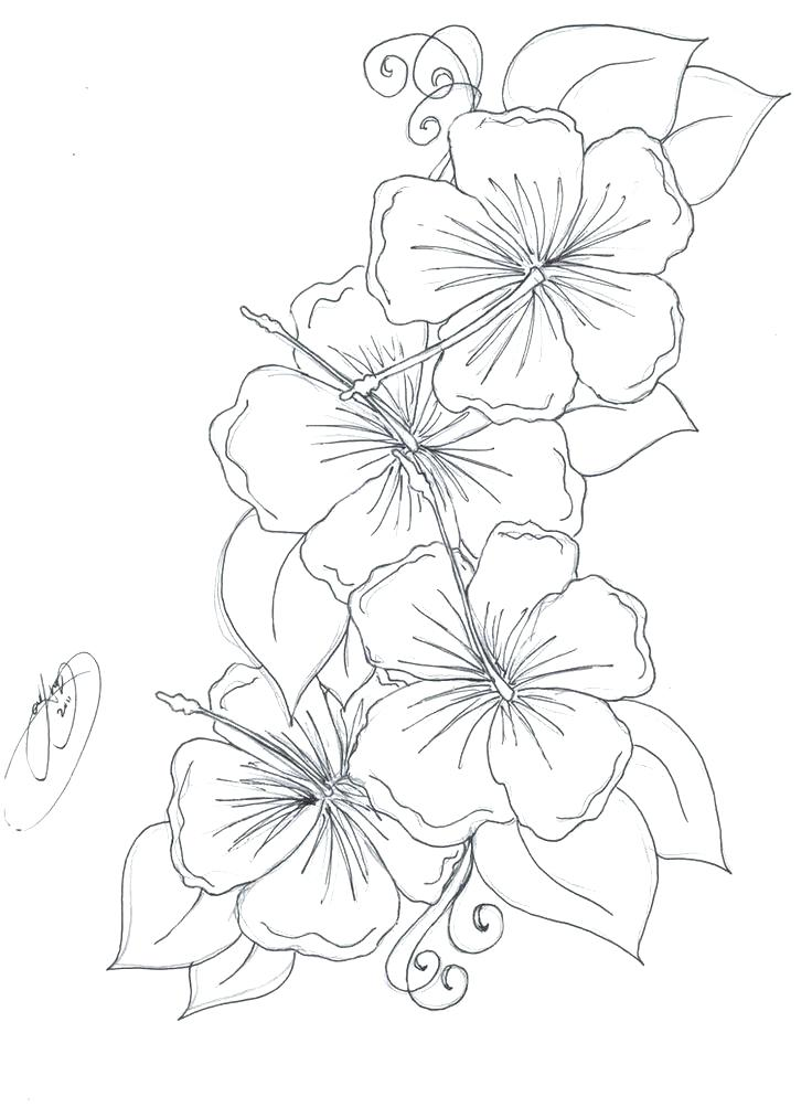 736x1013 Flower Vase Coloring Pages Pretty Flowers Coloring Pages Printable