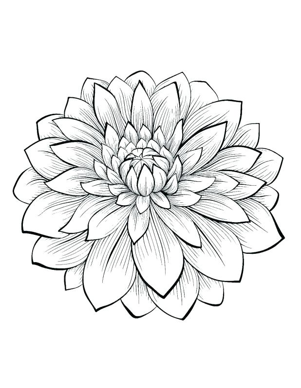 618x798 Intricate Flower Coloring Pages Dahlia Color One Of The Most