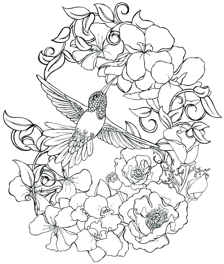 736x866 Realistic Flower Coloring Pages Detailed Flower Coloring Pages