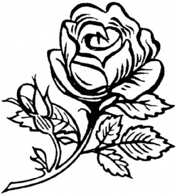 600x660 Rose Is Beautiful Flower Coloring Page