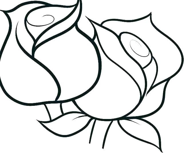 643x535 Rose Flower Coloring Pages For Adults