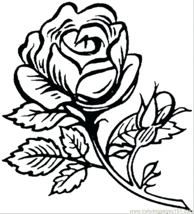 650x715 Beautiful Flower Colouring Pages Big Rose Coloring Page Free