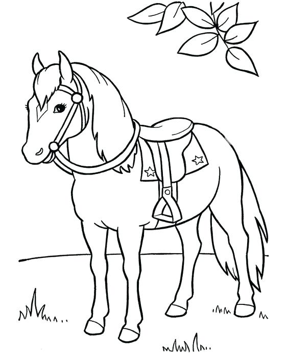 564x690 Spirit Horse Coloring Pages Spirit Horse Pictures To Color