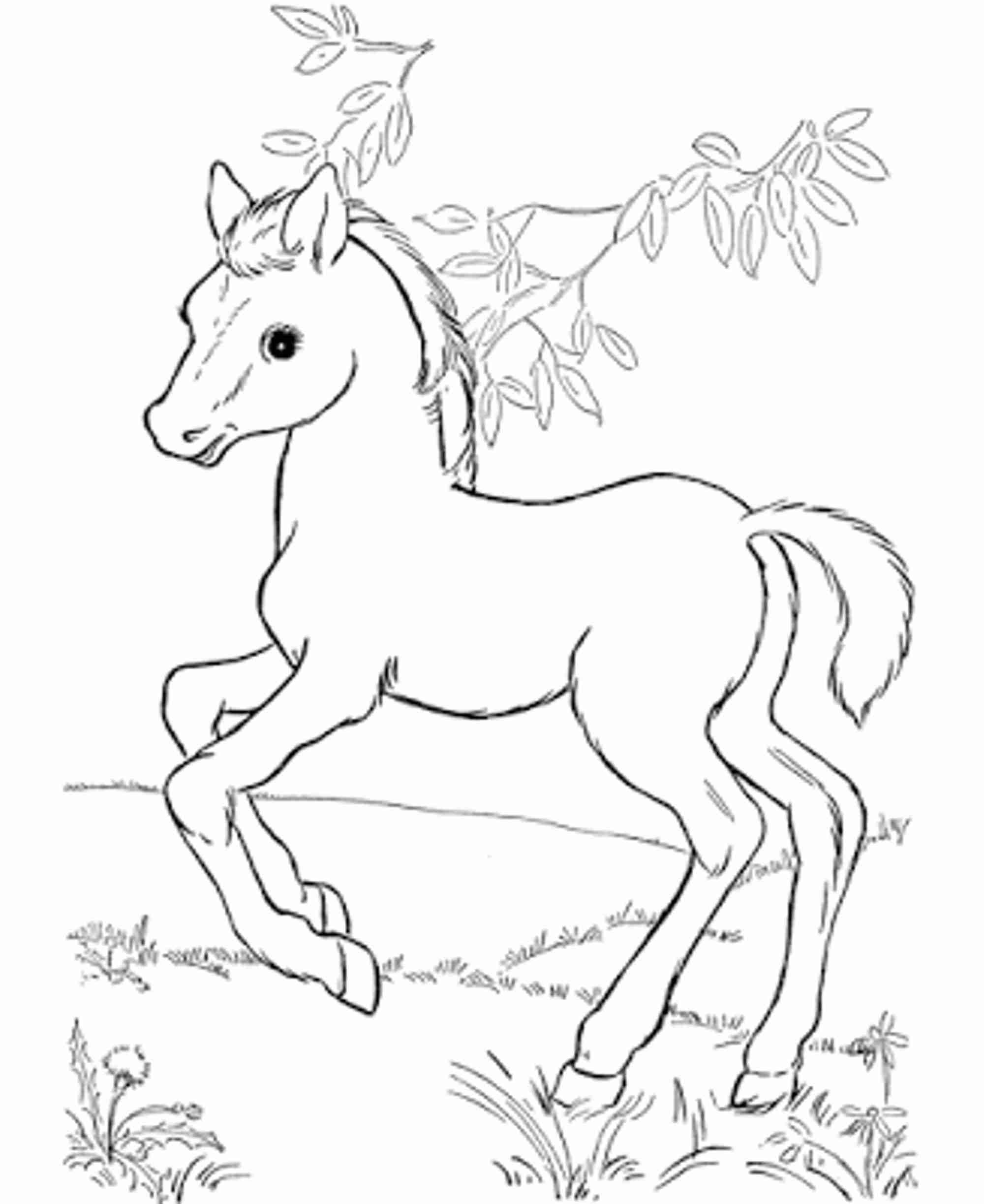 2000x2446 Baby Horse Coloring Pages Depetta Endearing Enchanting Cute
