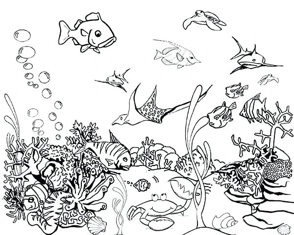 600x480 Coloring Pages Fish Tropical Fish Tank Coloring Page Online