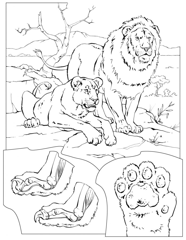 791x1024 Lion Pride Coloring Pages Best Of Mammals African Lion Coloring