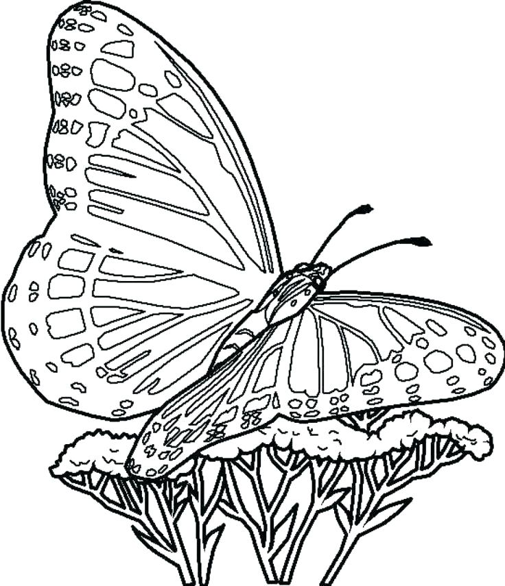 print butterfly coloring pages at getdrawings | free download