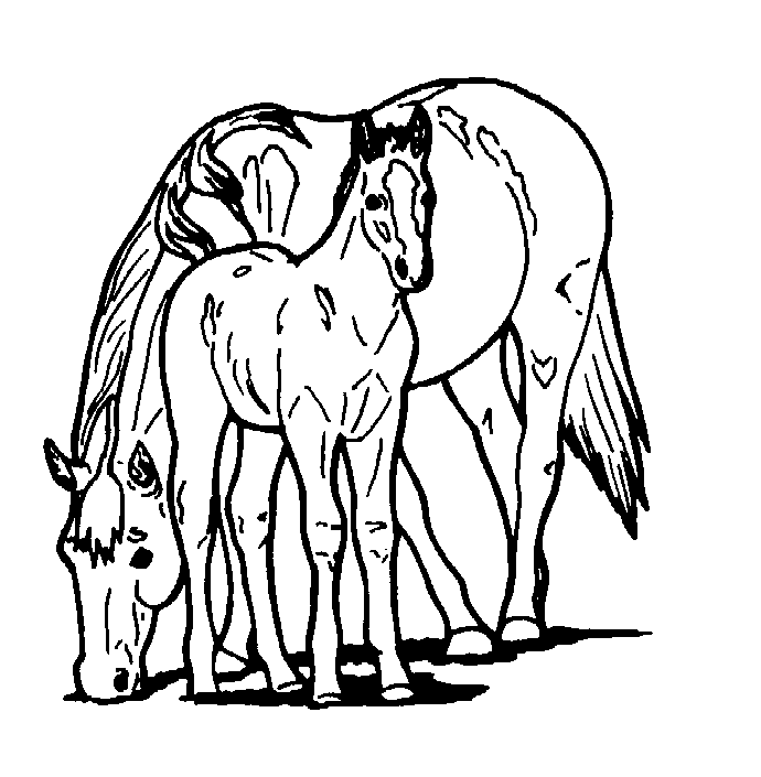 690x705 Free Printable Horse Coloring Pages For Kids