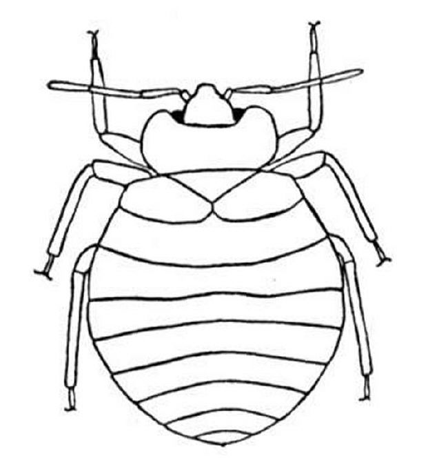 Printable Bug Coloring Pages At Getdrawings Com Free For Personal
