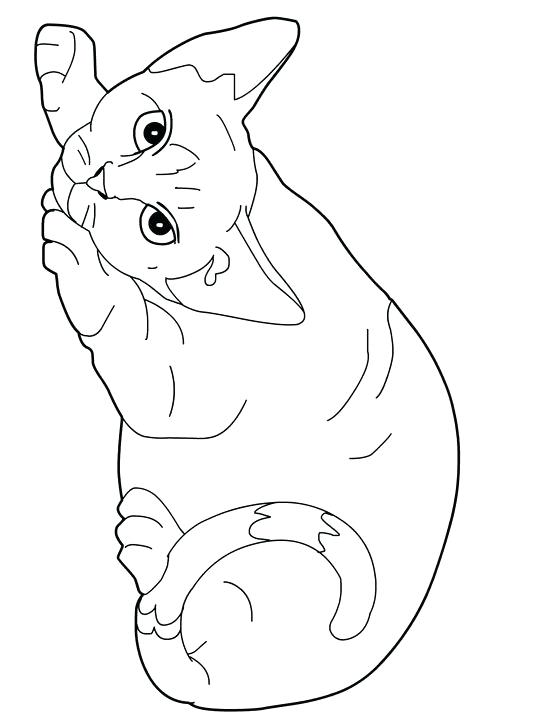 picture about Printable Pictures of Cats identify Printable Cat Coloring Web pages For Young children at