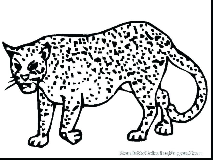 878x658 Cheetah Coloring Pages Cheetah Coloring Pages To Print Cheetah