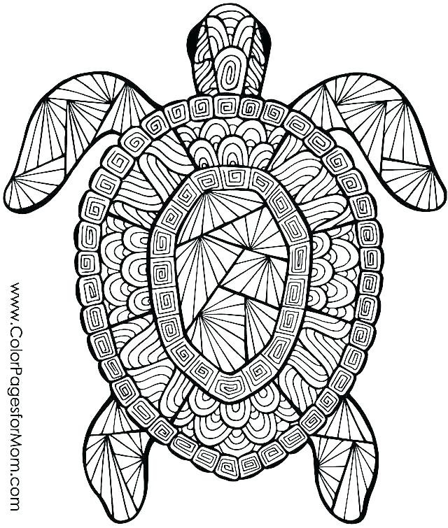 640x755 Cheetah Coloring Pages To Print Cheetah Coloring Pages To Print