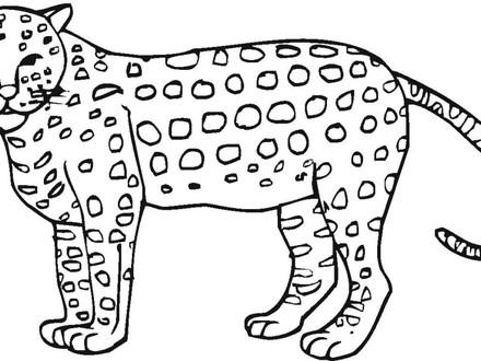 440x330 Cheetah Coloring Pages To Print, Printable Cheetah Coloring