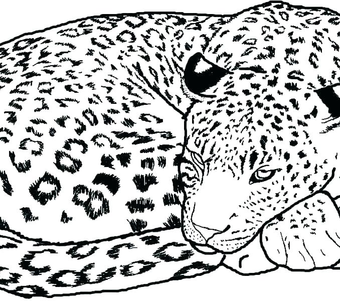 678x600 Cheetah Coloring Pages To Print