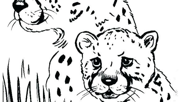 585x329 Cheetah Coloring Page Cheetah Coloring Page Cheetah Coloring Pages
