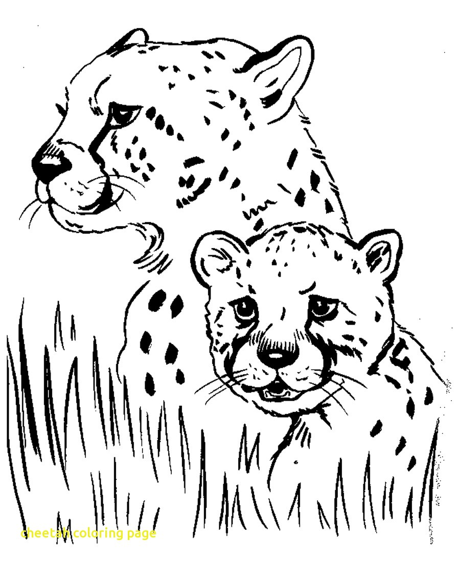 900x1101 Cheetah Coloring Page With Free Printable Pages For Kids