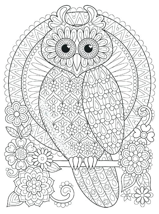 521x700 Owl Pictures Color Also Owl Coloring Cute Owl Coloring Pages