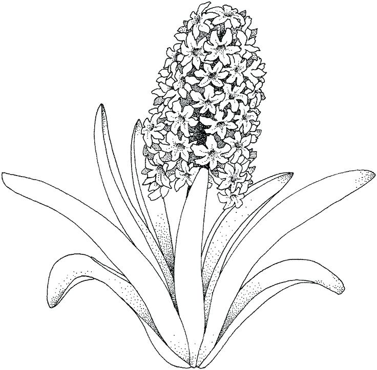 736x723 Flower Coloring Page Summer Flowers Printable Coloring Pages Free
