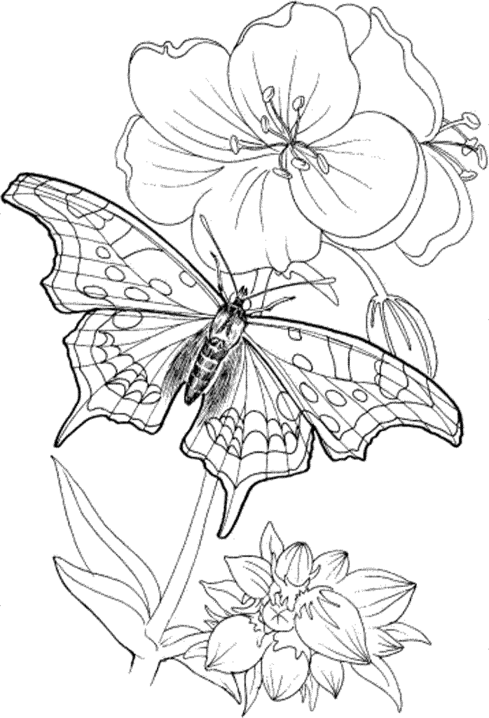 698x1024 Free Printable Coloring Pages Adults Only Az Coloring Pages Free
