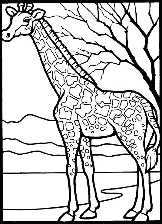 535x740 Zoo Animals Coloring Worksheet Icontent