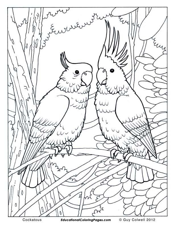 612x792 Free Jungle Bird Coloring Pages For Adults