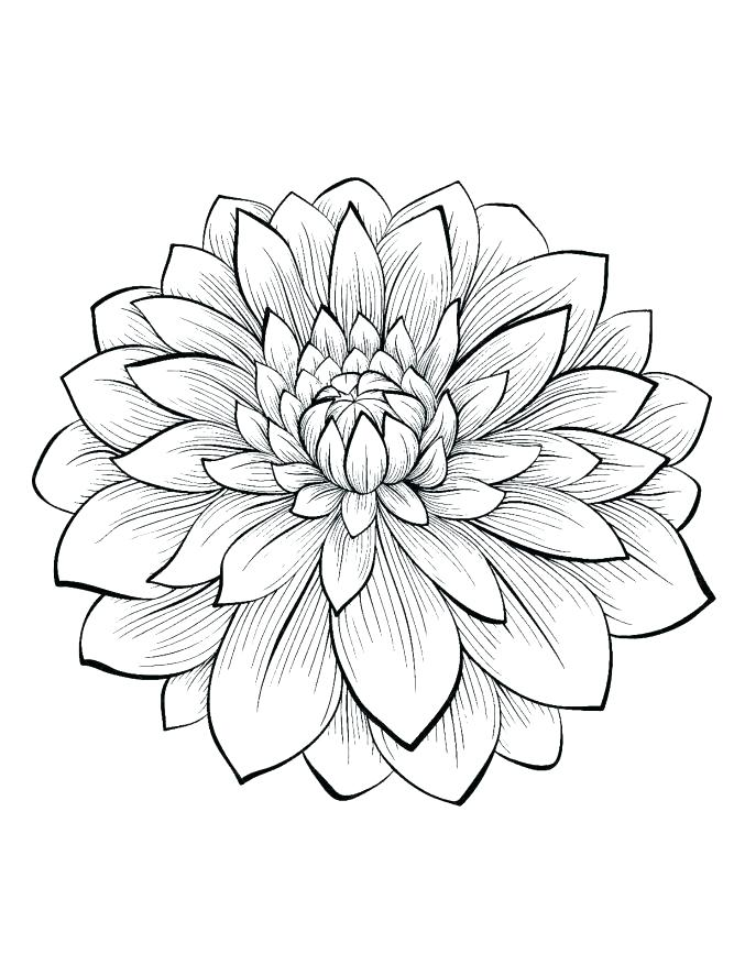 687x887 Coloring Pages Flowers Printable