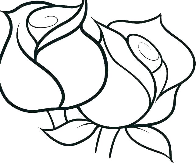 643x535 Hawaiian Flower Coloring Pages